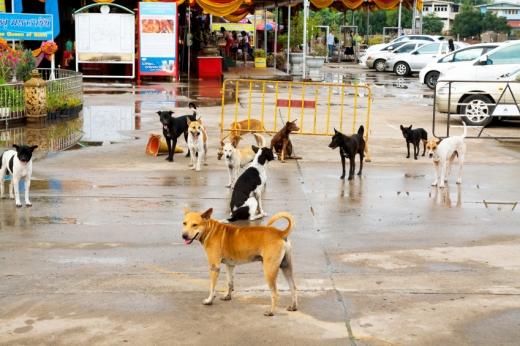 Több kutya áll egy parkoló előtti kordon előtt.