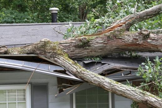 Egy nagy faág rázuhant egy ház tetejére.