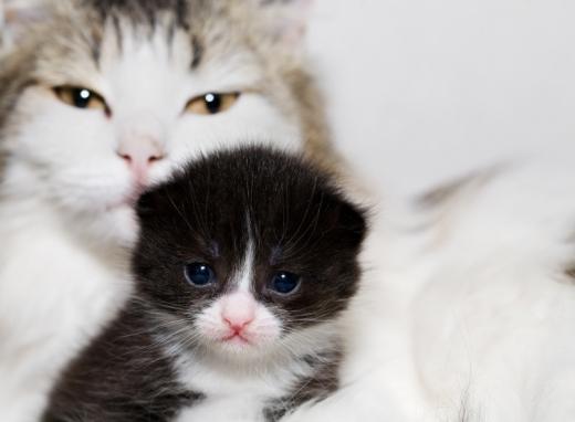 Egy kiscica mögött egy nagyobb cica néz felénk.