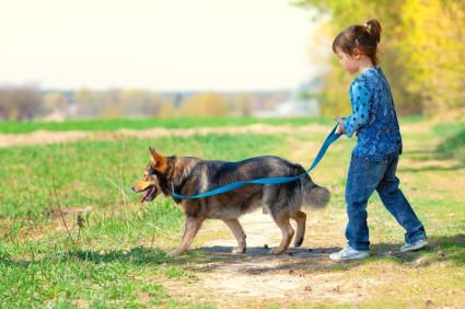 Egy kislány kék pórázon kutyát sétáltat.