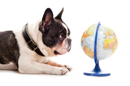 Egy kutya fekszik és egy földgömböt néz.
