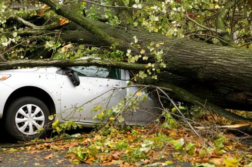 Egy nagy fa rádőlt egy autóra.
