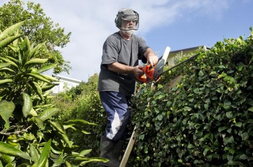 Idős Úr védőmaszkban, létrán állva a kerítésen lévő sövényét nyírja.