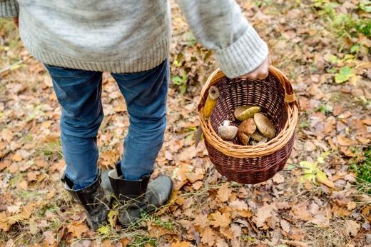Egy csizmás, pulóveres ember az erdőben kosarat tart a kezében, amiben gomba van.