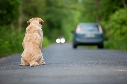 Egy elszökött kutya ül az út közepén.