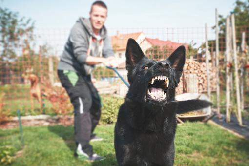 Egy agresszív kutya ugat, a gazdája pedig próbálja visszatartani a pórázzal.