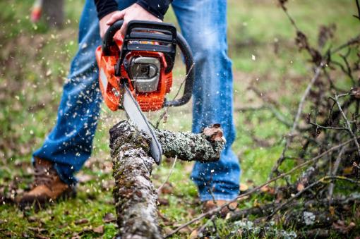 Egy favágó láncfűrésszel vágja a fát.