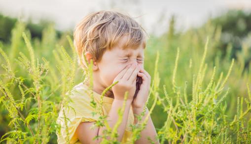 Egy kisfiú a parlagfű között áll, és fújja az orrát.