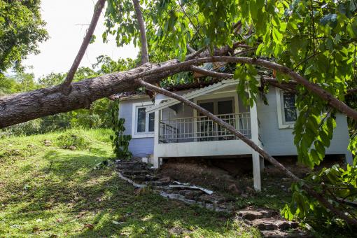 Egy fa rádőlt egy házra.