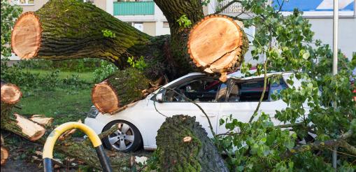 Autóra rádőlt fa