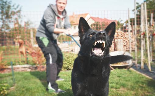 kutya, kutyatartás, baleset, kártérítés